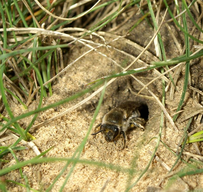 ground bee nest reservations