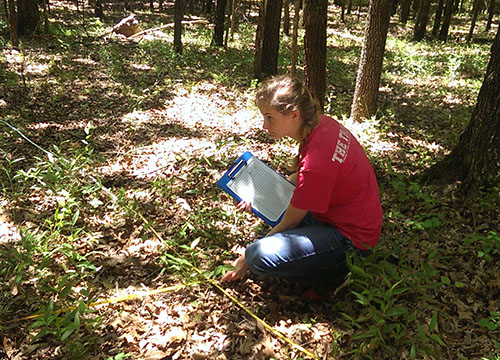 Student taking sample tree measurements on campus woodland